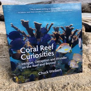 Coral Reef Curiosities. By Chuck Weikert.