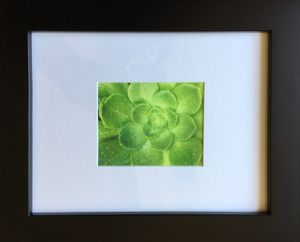 Sunlight and Rain on Succulents