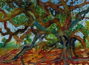 The Mother Tree of Santa Barbara