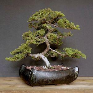 Dec 11: Snip N Sip: Bonsai Workshop