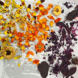 Oct 30: Eco Floral Dye Class