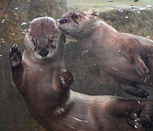 Otter Care