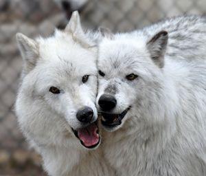 Wolf Care