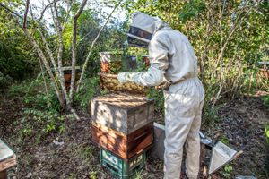 Working with your Bees & Growing your Colony