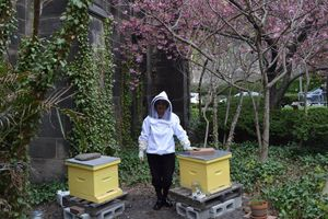 Harvesting the Products of the Hive and Hive Winterization