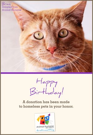 Happy Birthday - Cat Card