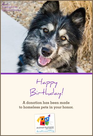 Happy Birthday - Dog Card