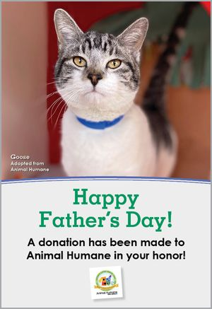 Father's Day - Cat Card