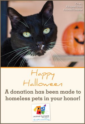 Halloween -Cat Card
