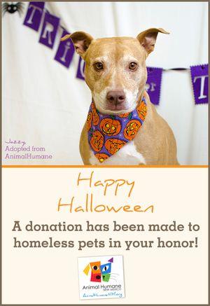 Halloween -Dog Card