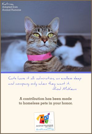In Honor of Person - Cat Card