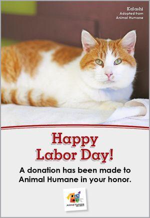Labor Day - Cat Card