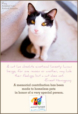 In Memory of Person - Cat Card