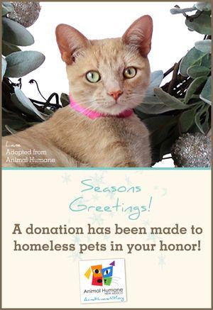 Season's Greetings  - Cat Card