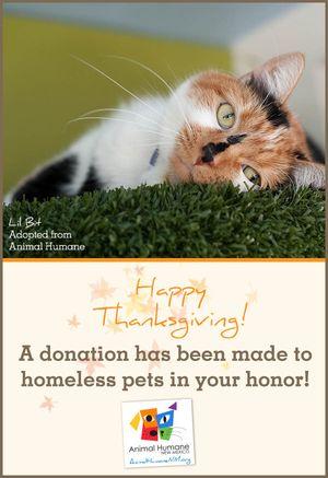 Thanksgiving - Cat Card
