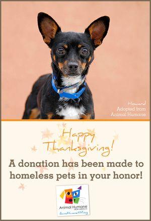 Thanksgiving - Dog Card