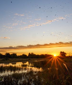Pledge to the Wetlands Fund