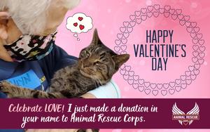 Happy Valentine's Day! (cat version)
