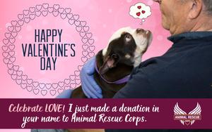 Happy Valentine's Day! (dog version)