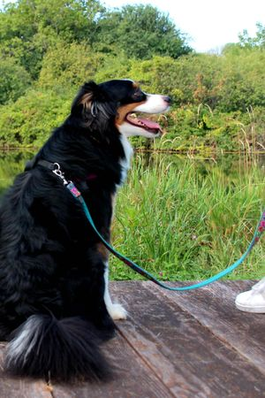 SCA Dog Dock - Tuesday, July 27