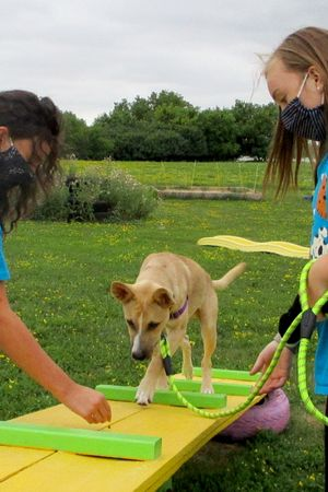 Camp Gone to the Dogs: June 21 - 25