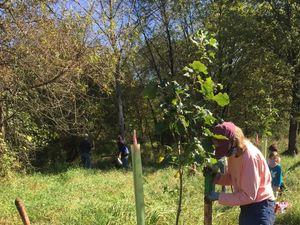 Tree Fund Donation